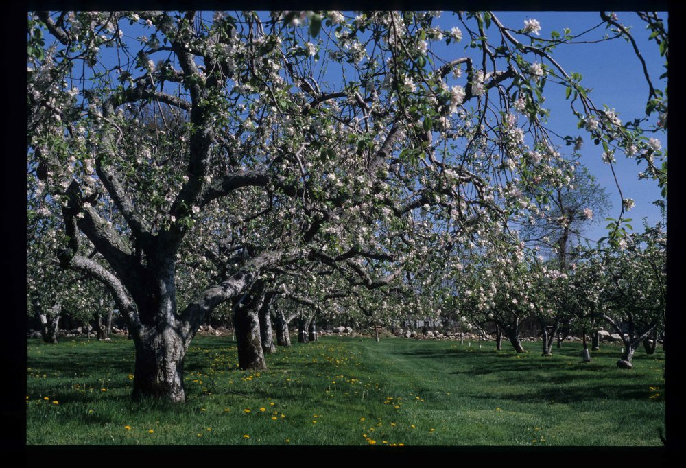 Orchard Scan Image 6.jpg