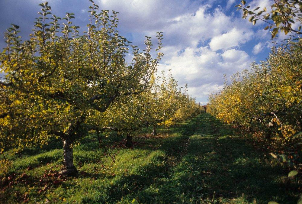 Orchard Scans Image1-2.jpg