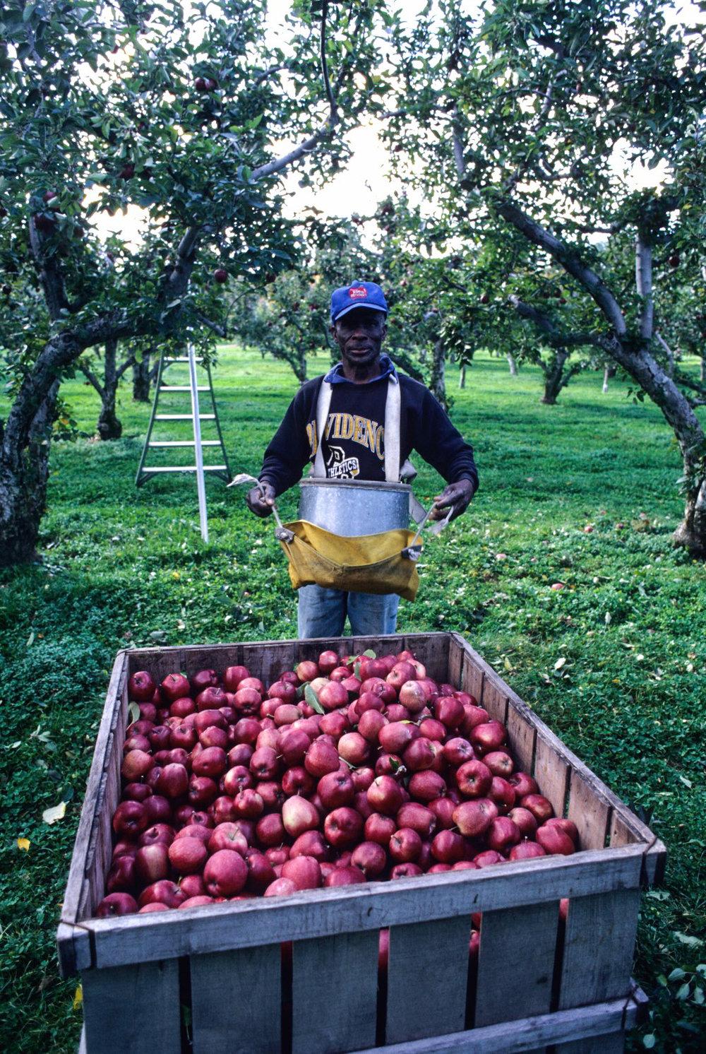 Pipin Orchard.jpg