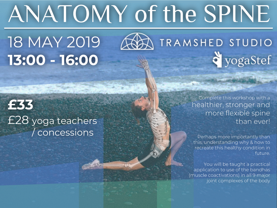 Yogastef Anatomy Poster colour May 19.png