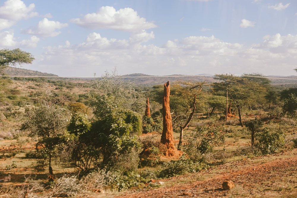Hundreds of termite mounds (even a couple of metres tall!) on the way