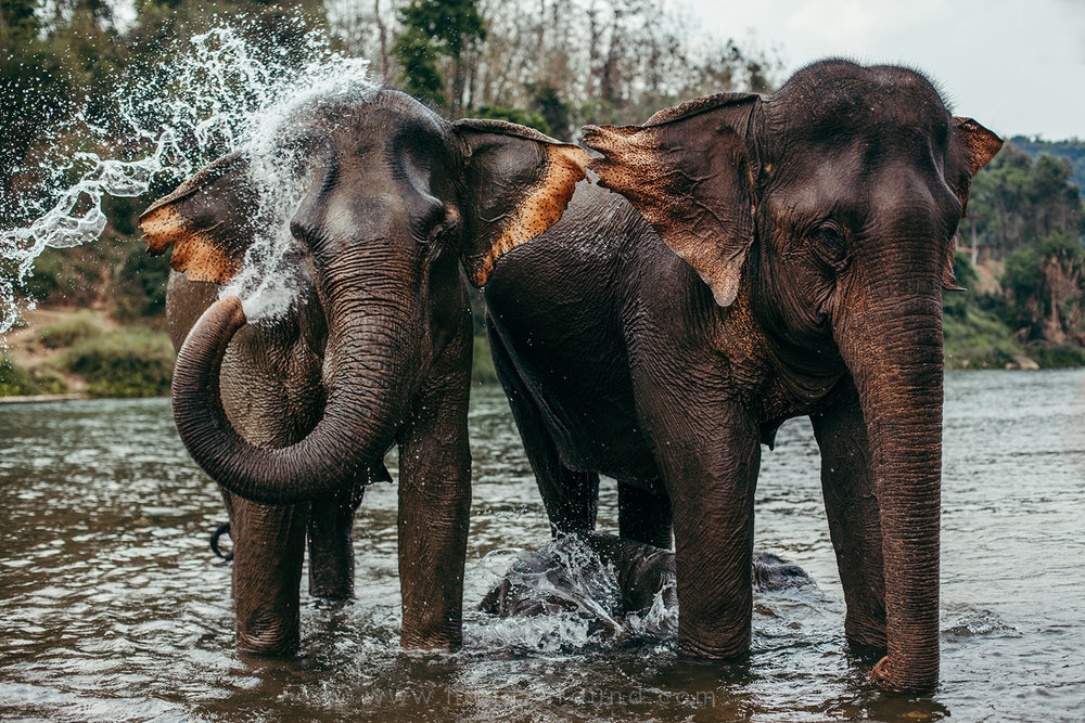 Elephants from Manda Lao Elephant Sanctuary
