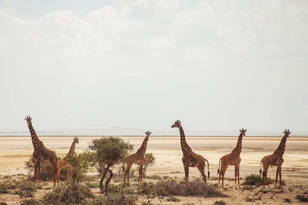 019_HANDZAROUND_TRAVEL_PHOTOGRAPHY_FILMS_WORK_WITH_US_KENYA_RWANDA_UGANDA_EAST_AFRICA_BLOGGER.jpg