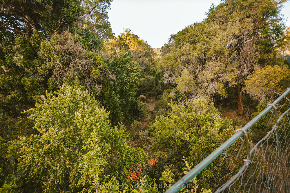 009_HANDZAROUND_NGARE_NDARE_FOREST_CANOPY_WALK_NRT_THE_BIG_NORTH_LAIKIPIA_KENYA_AFRICA.jpg