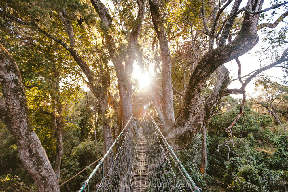 007_HANDZAROUND_NGARE_NDARE_FOREST_CANOPY_WALK_NRT_THE_BIG_NORTH_LAIKIPIA_KENYA_AFRICA.jpg