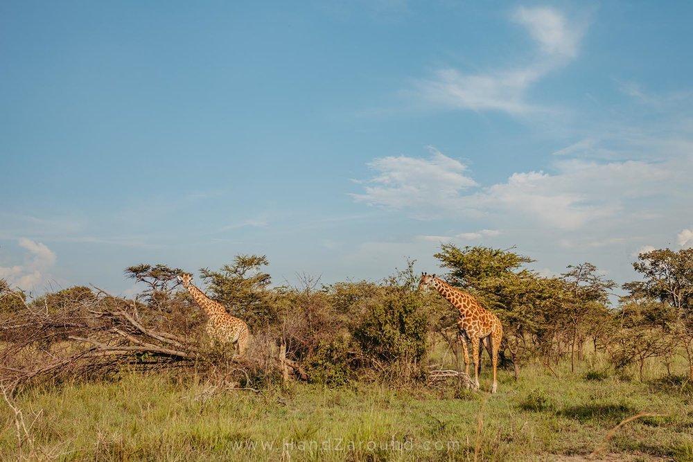 110_HandZaround_Akagera_African_Parks_Rwanda_East_Africa.jpg