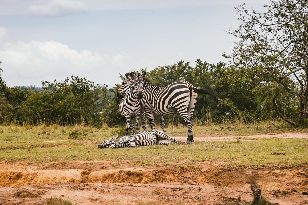 135_HandZaround_Akagera_African_Parks_Rwanda_East_Africa.jpg