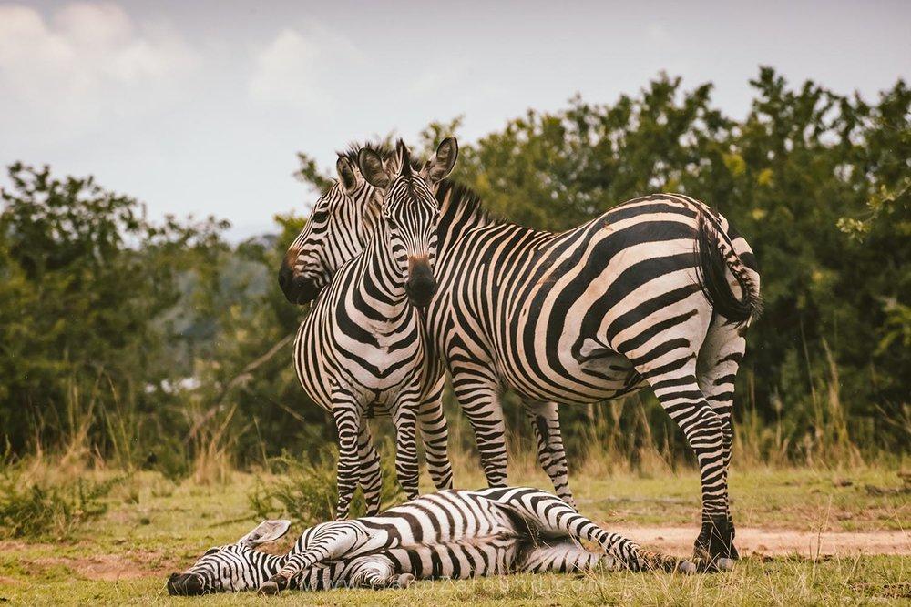 107_HandZaround_Akagera_African_Parks_Rwanda_East_Africa.jpg
