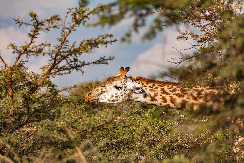 112_HandZaround_Akagera_African_Parks_Rwanda_East_Africa.jpg