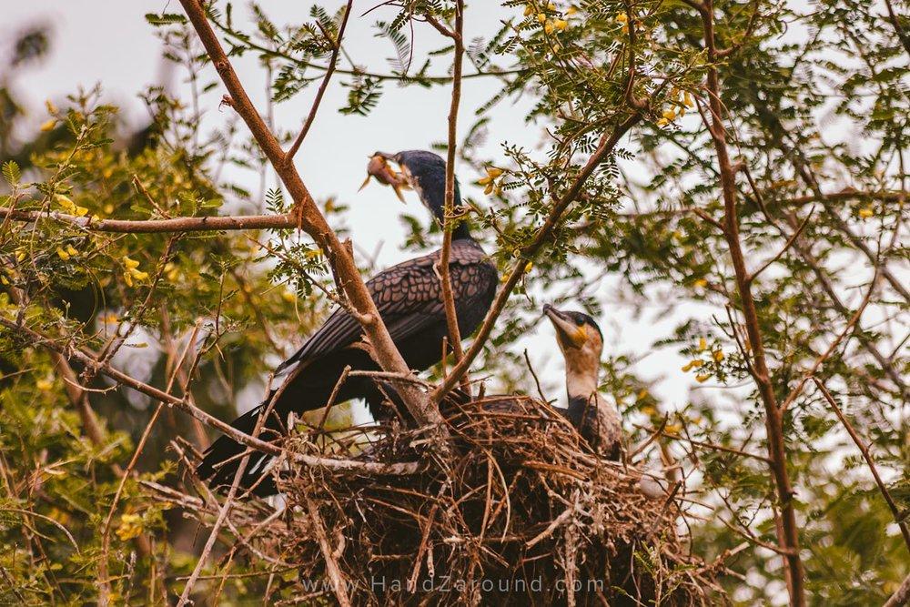 122_HandZaround_Akagera_African_Parks_Rwanda_East_Africa.jpg
