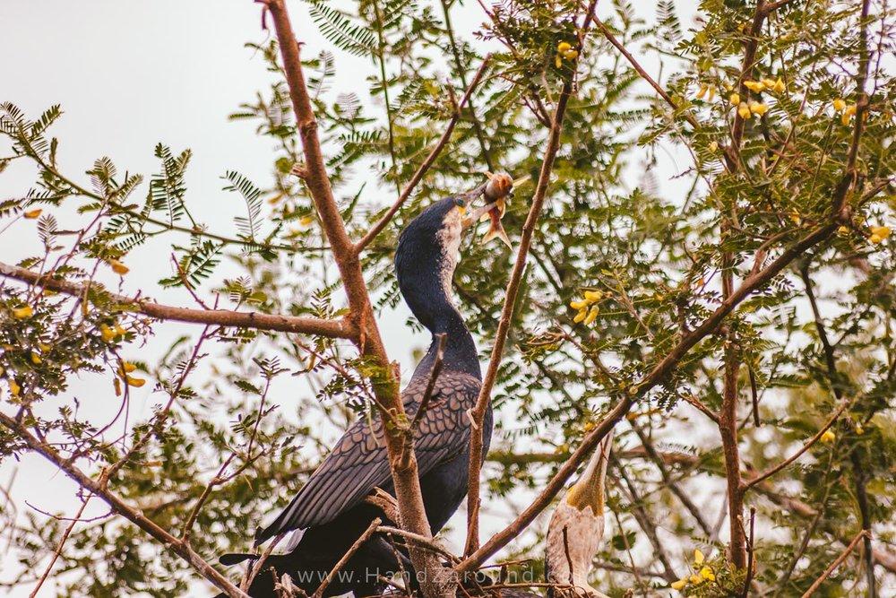 094_HandZaround_Akagera_African_Parks_Rwanda_East_Africa.jpg