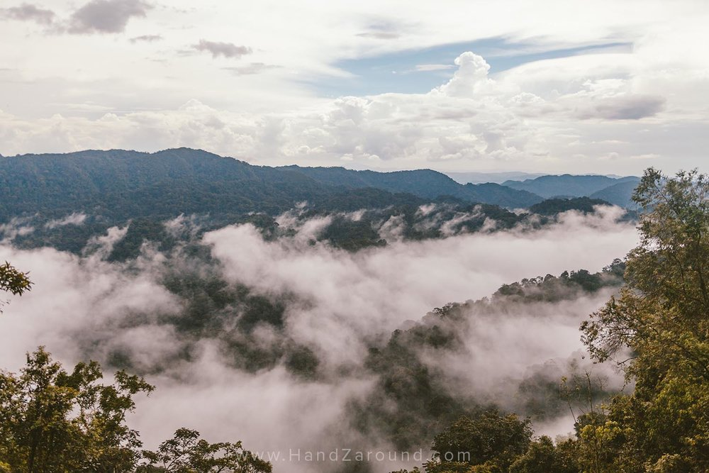 The misty clouds above Nyungwe's trees