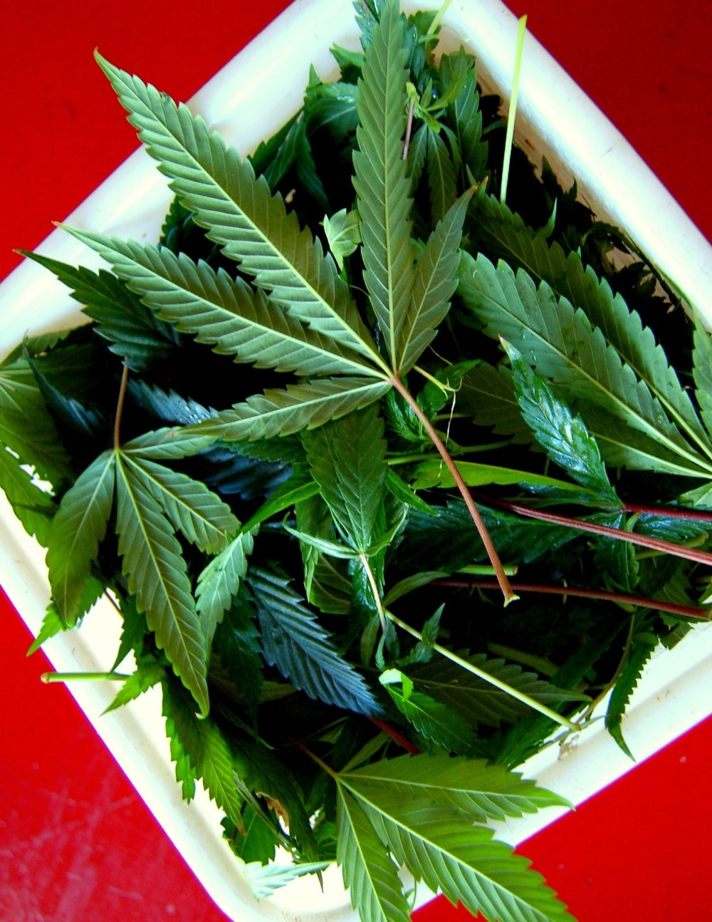photo: sharon letts