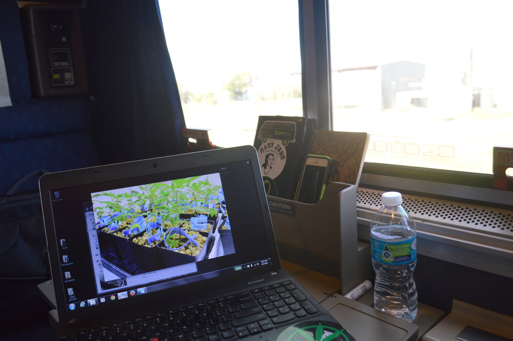 on deadline on a train from colorado to california for dope magazine, photo: sharon letts