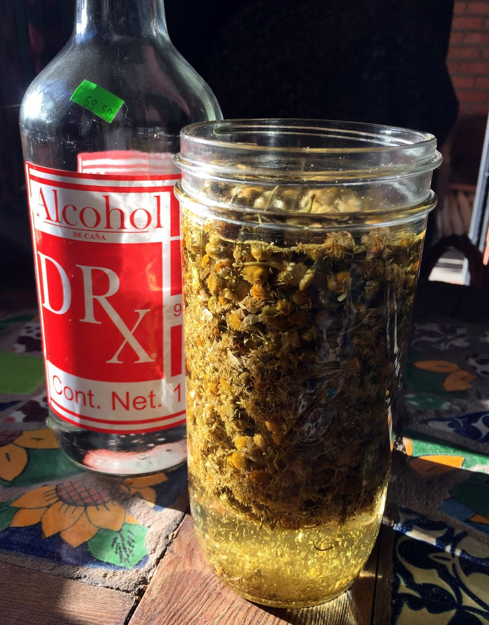 Chamomile flowers soaking in 96 percent alcohol (available in Mexico $4-7) to reduce and put into capsules. Recipe under Apothecary/recipes on this website. photo: sharon letts