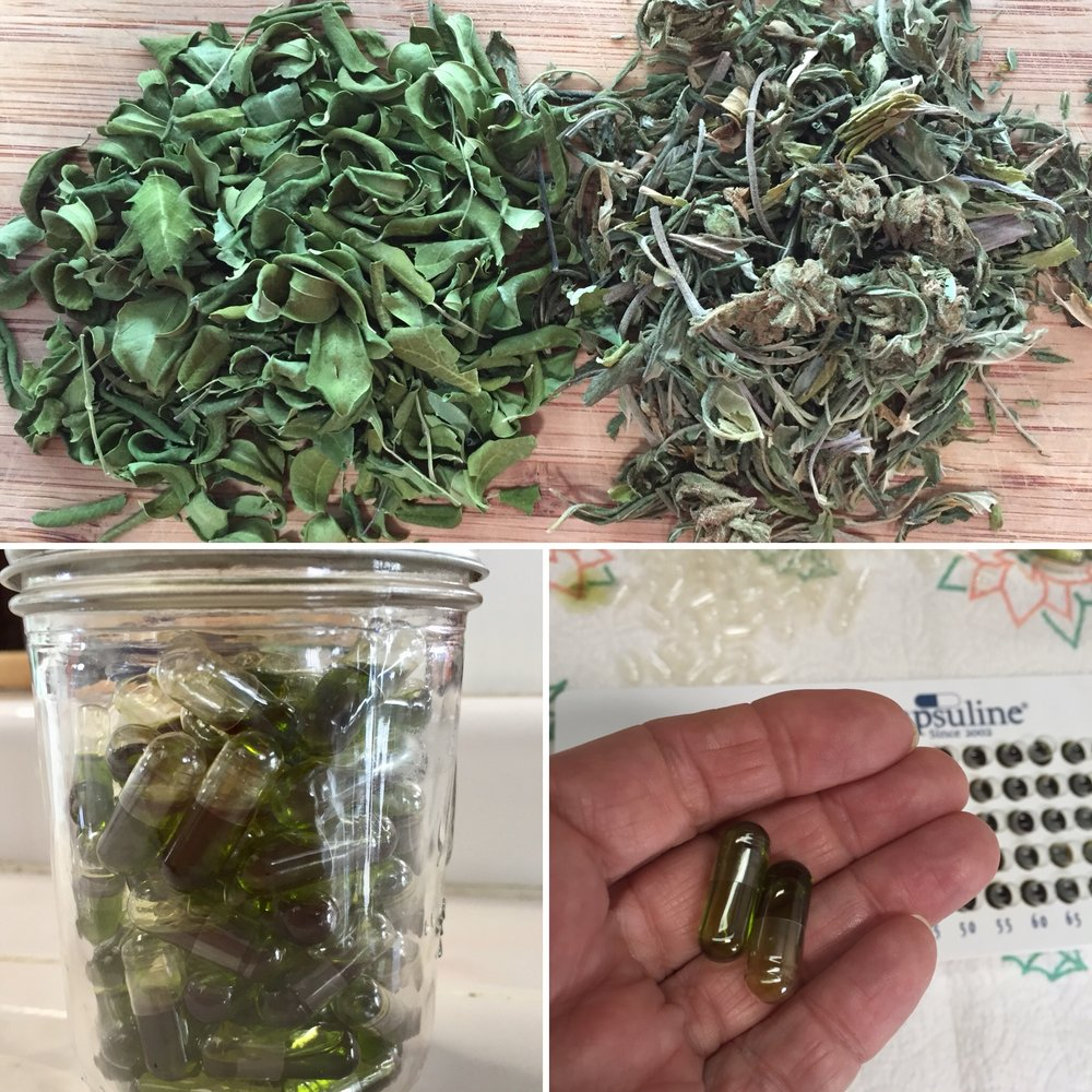 Moringa & Cannabis Caps - Moringa is good for fatigue, so I use a combination of half cannabis, half moringa for my daytime caps in an alcohol reduction.Four cups of plant material per one liter of alcohol makes about 80 or 90 caps. The bright green color comes from the Moringa leaf.