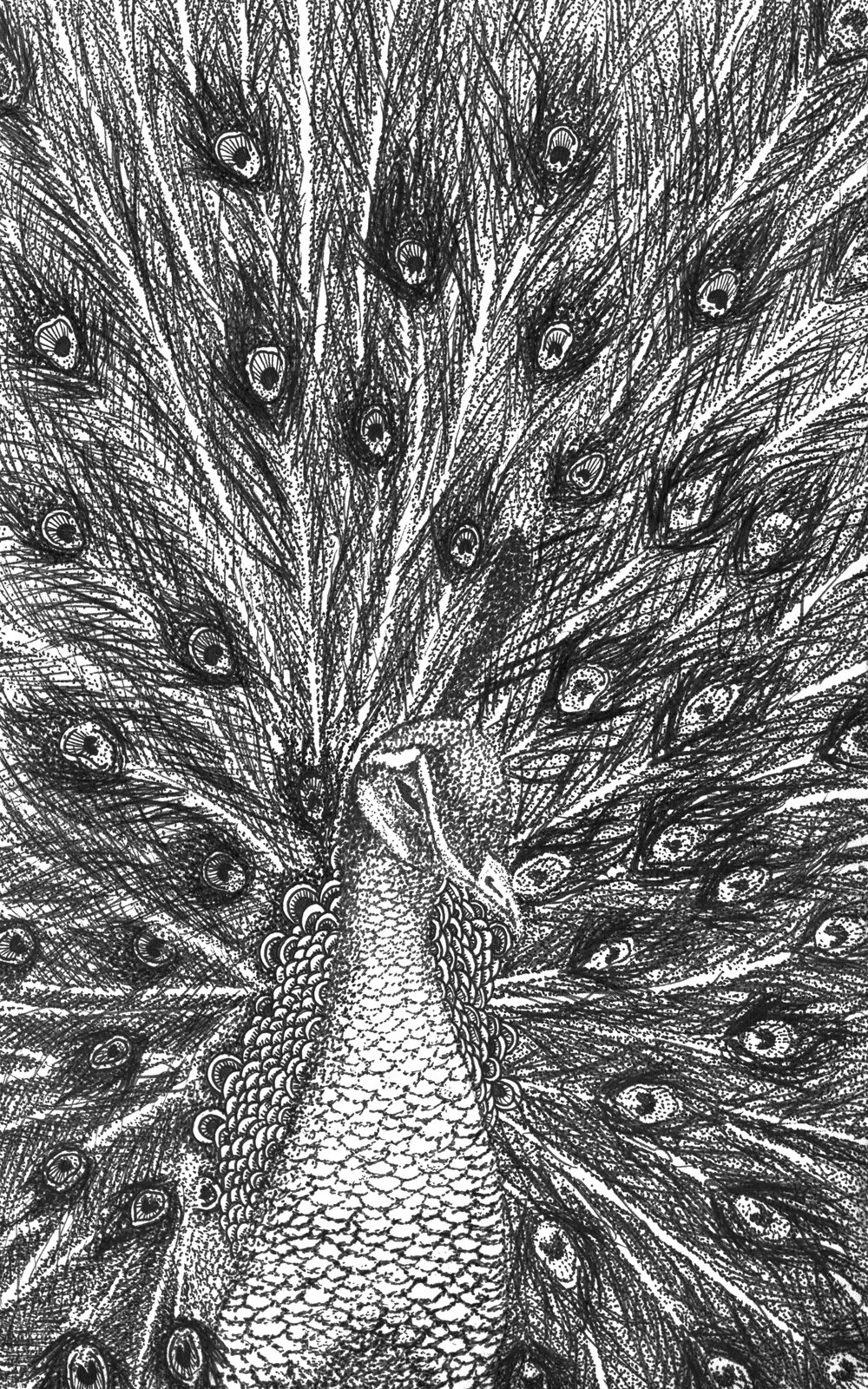 Peacock_RGB.jpg