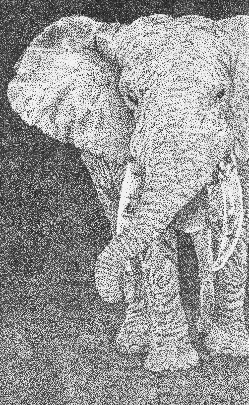 Fauna_Elephant_RGB.jpg