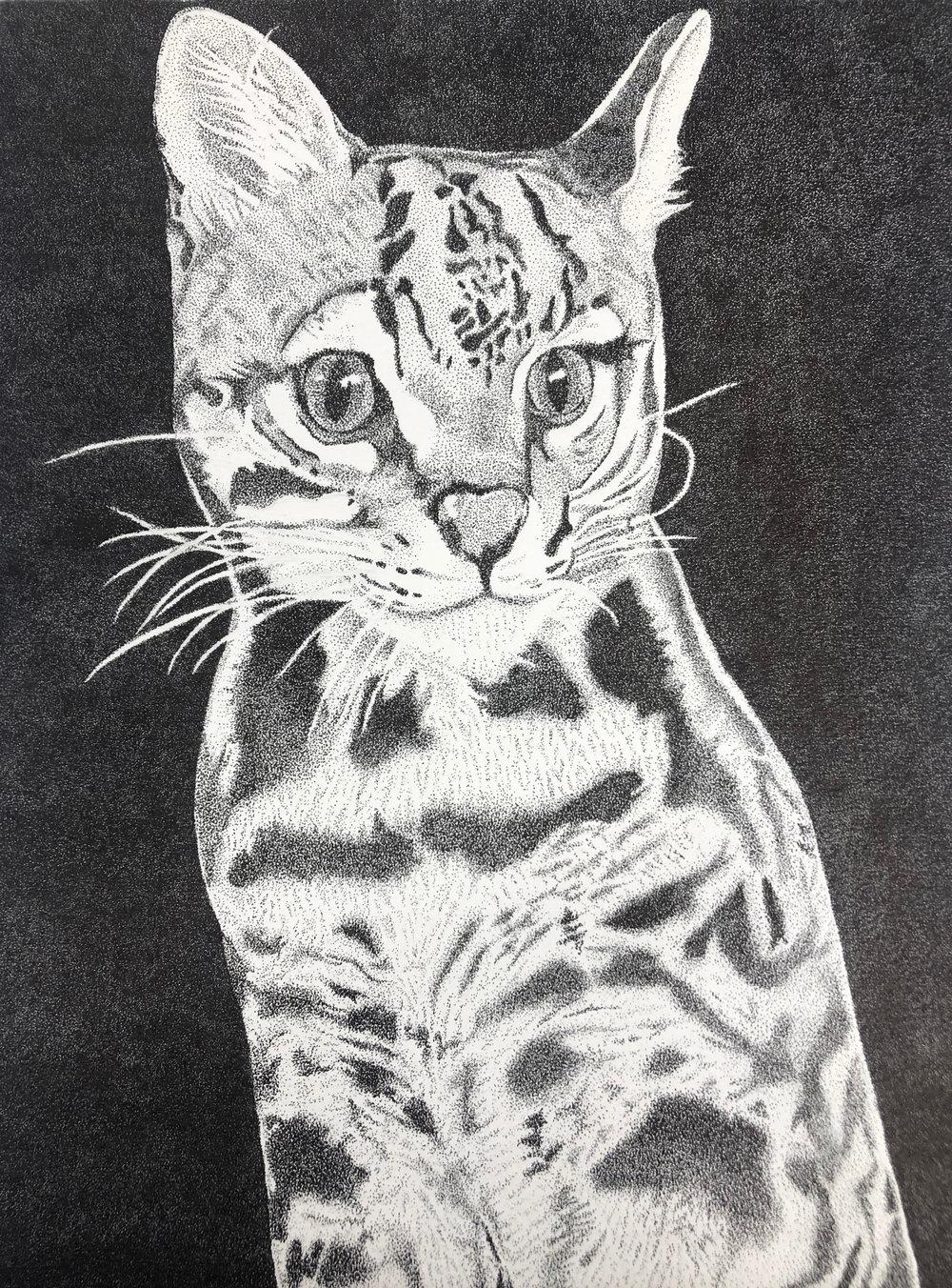 Krys-Ha-Ocelot-Illustration.jpg