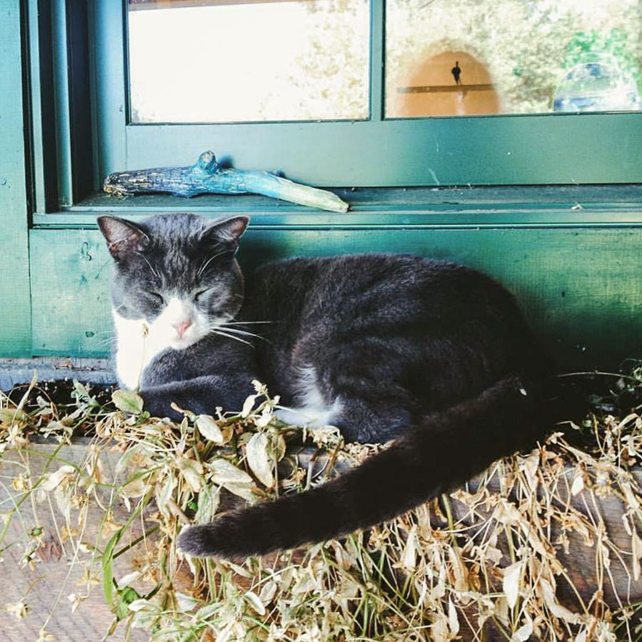 maggie-hill-cat.jpg