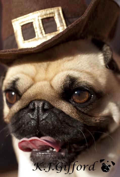 Fawn Pug Pilgrim Hat