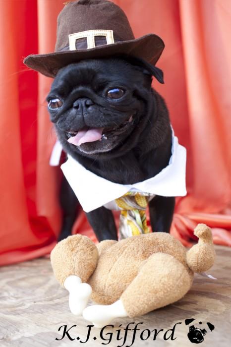 Black Pug with Turkey