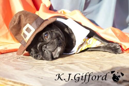 Black Pug Reclining