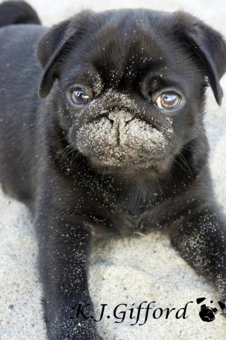 Puppy at Beach