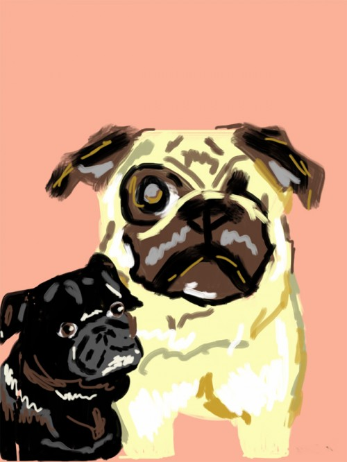 Drawing Fawn Pug and Black Pug