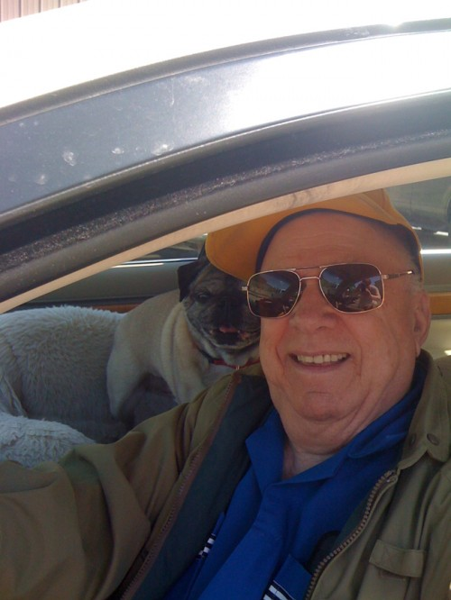 Fawn Pug and Man in Car