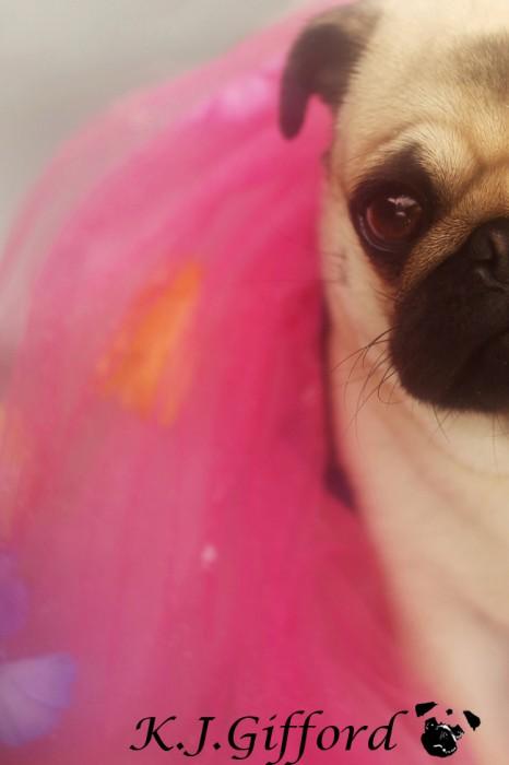 Fawn Pug Pink Tutu