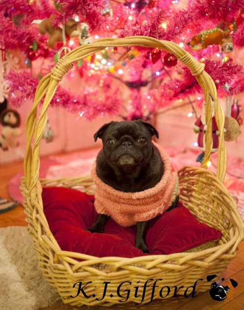 Black Pug in Pink Sweater and Pink Christmas Tree