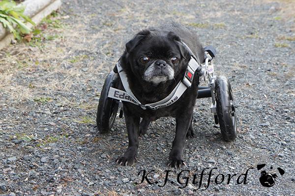 Vader in his Eddie's Wheels Cart