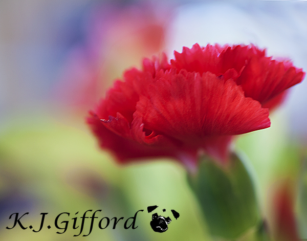 Blog Red flower