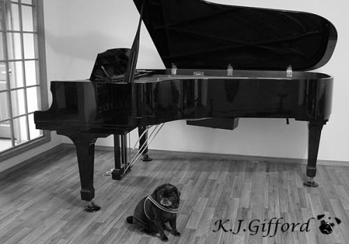 Piano Pug