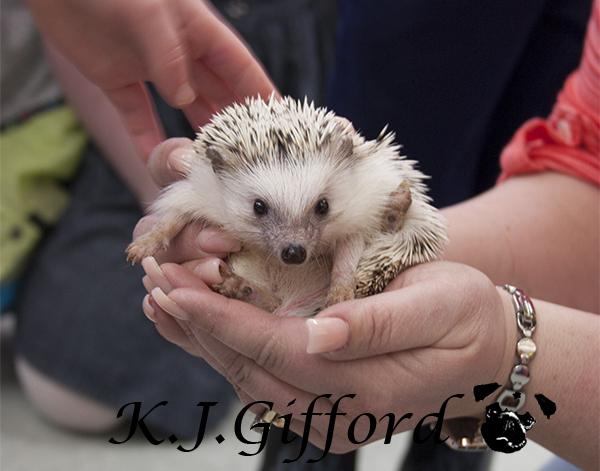 Blog Hedgehog