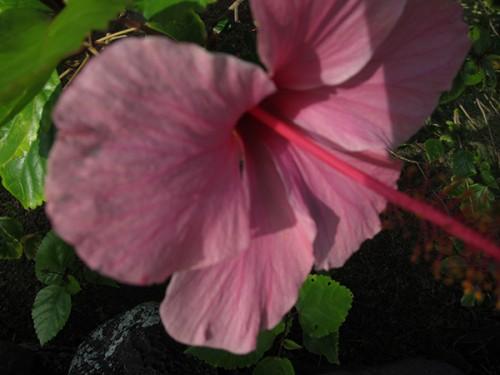 Blog Flower Pink