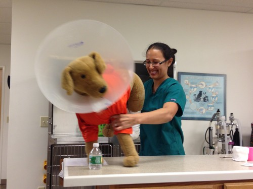Dr. Keady works on a stuffed dog