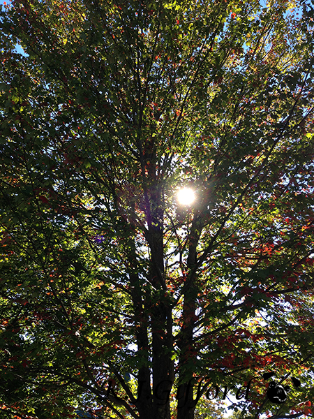 blog treesun1