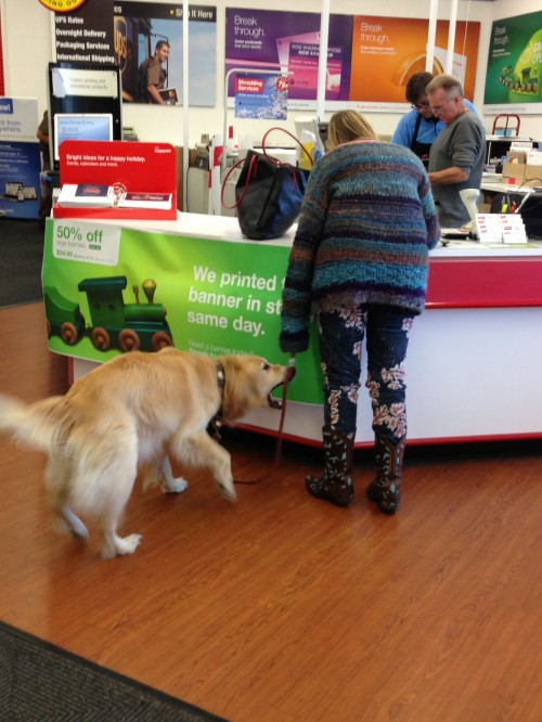 Dog at Staples