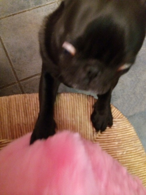 alfie and pink pig
