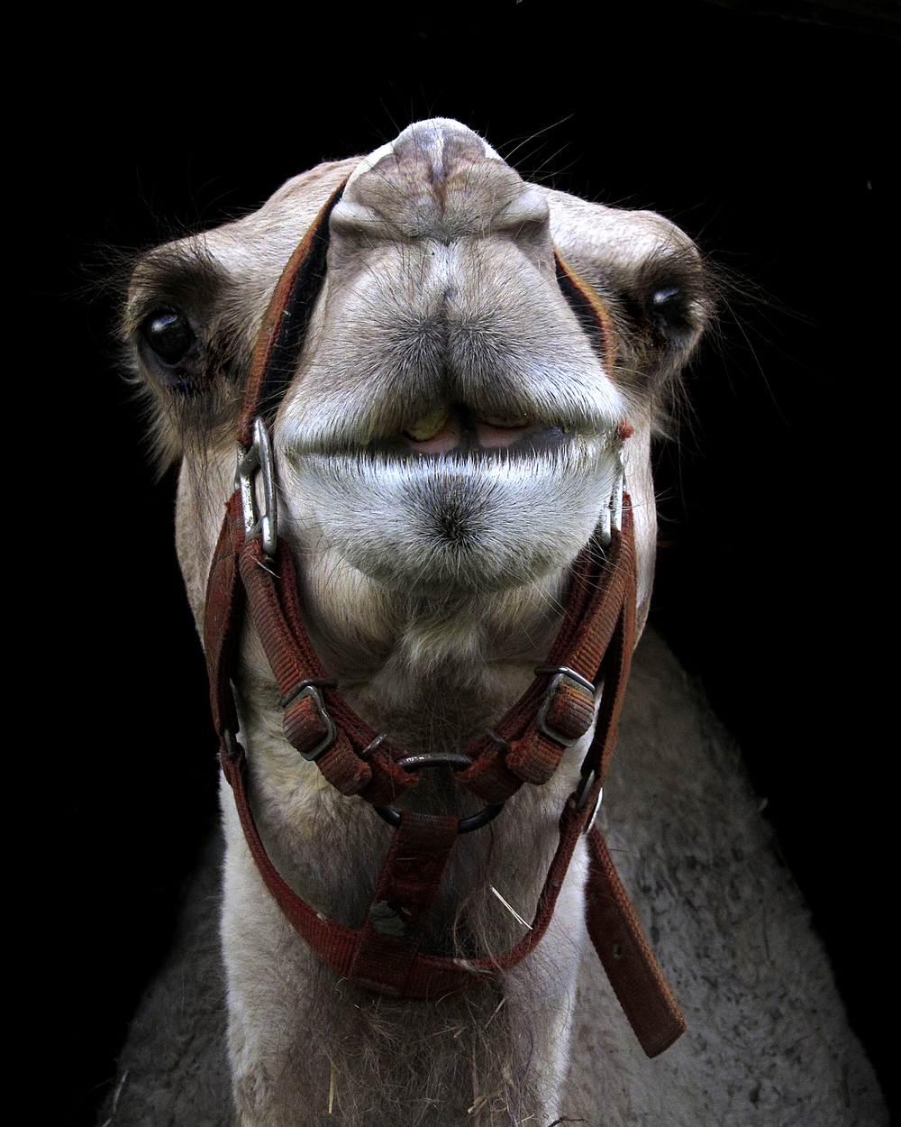 17 Portfolio-Camel.jpg