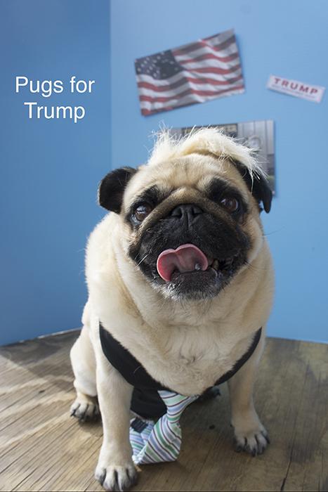 Alfie prefers Trump.
