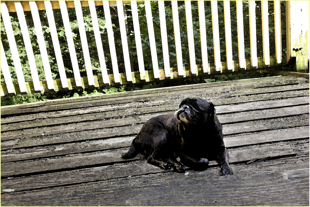Ghanny on the Deck