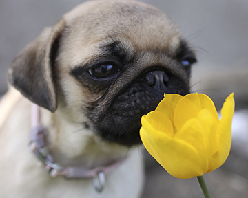 Alfie and the Tulip.jpg