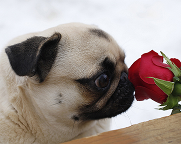 Stop and Smell the Roses.jpg
