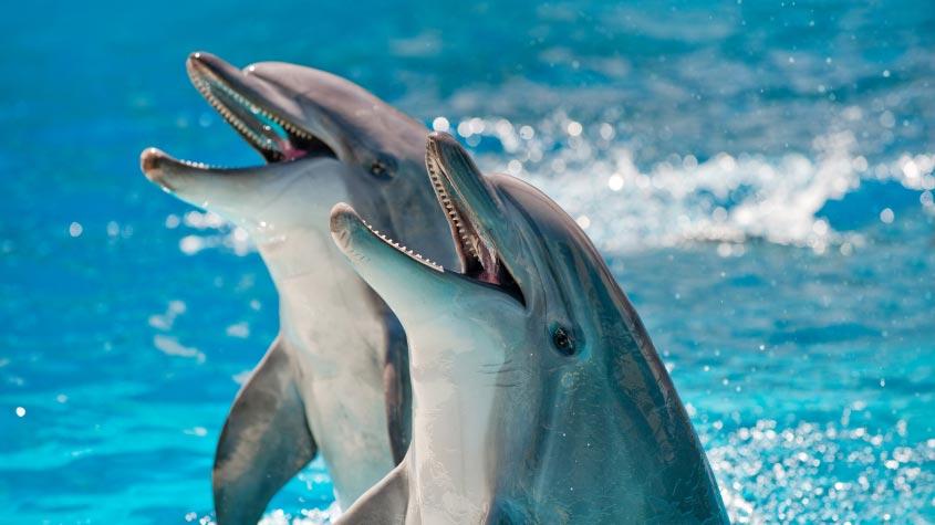 Dolphin fun.jpg