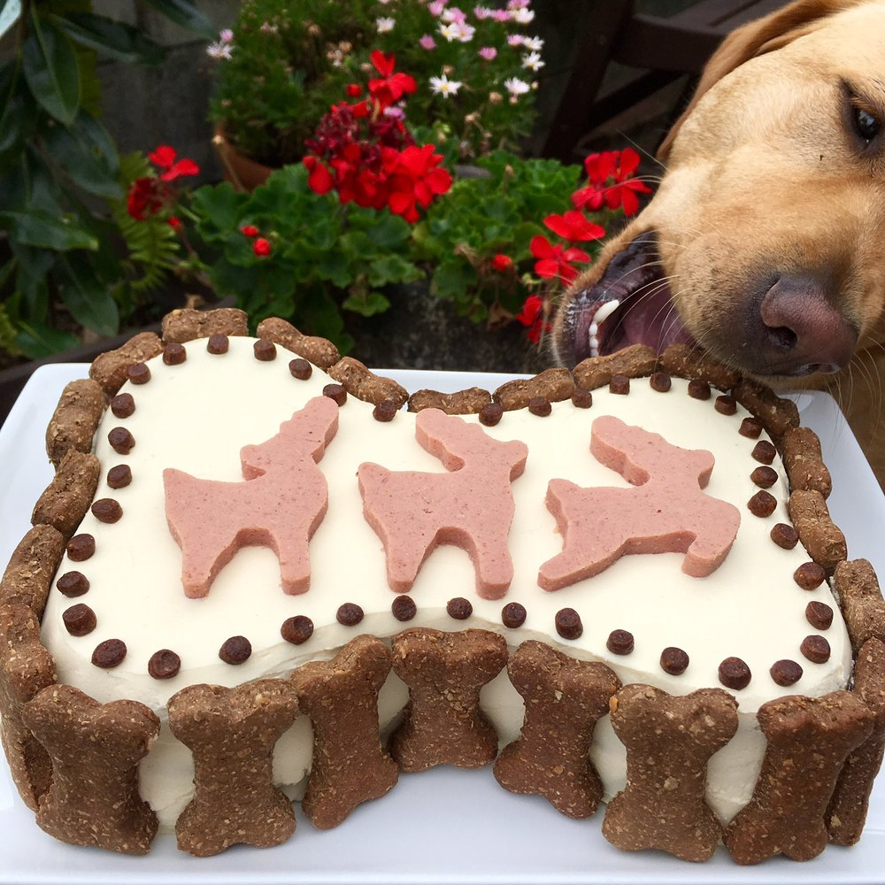 The Perfect Dog Christmas Cake Recipe
