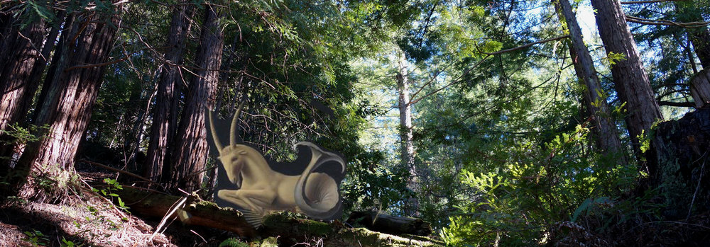 woods.2.jpg