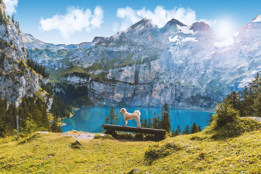 adventure-alpine-atmosphere-417096.jpg